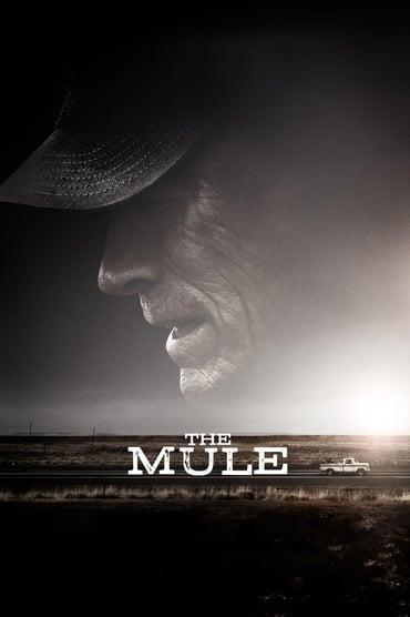 The Mule playing at the SouthTowne